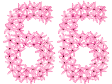 Numeral 66, sixty six, from natural flowers of hyacinth, isolated on white background