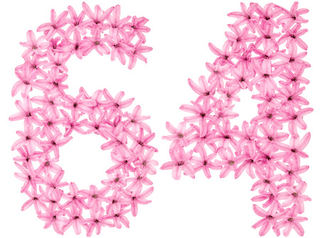 Numeral 64, sixty four, from natural flowers of hyacinth, isolated on white background