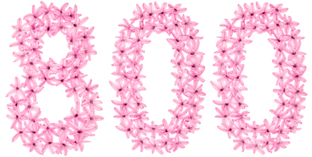 Numeral 800, eight hundred, from natural flowers of hyacinth, isolated on white background Banque d'images
