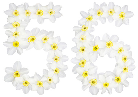 Numeral 56, fifty six, from natural white flowers of Daffodil (narcissus), isolated on white background Stock Photo