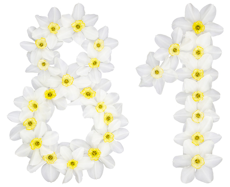 Numeral 81, eighty one, from natural white flowers of Daffodil (narcissus), isolated on white background