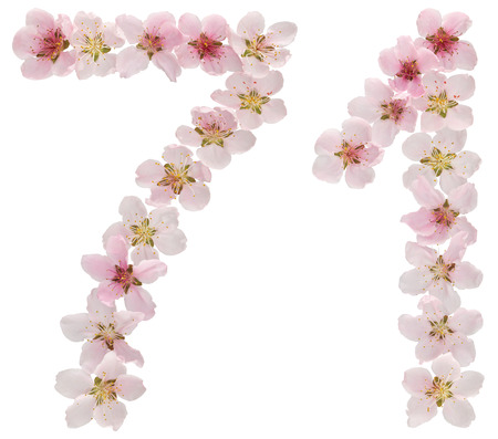 Numeral 71, seventy one, from natural pink flowers of peach tree, isolated on white background
