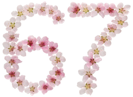 Numeral 67, sixty seven, from natural pink flowers of peach tree, isolated on white background
