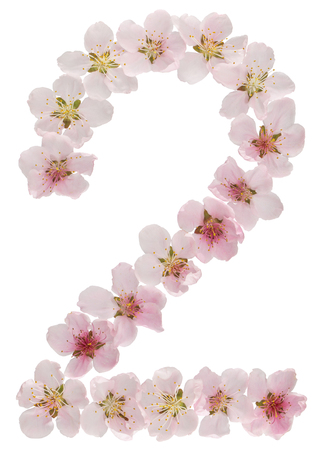 Numeral 2, two, from natural pink flowers of peach tree, isolated on white background Фото со стока
