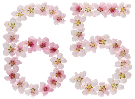 Numeral 65, sixty five, from natural pink flowers of peach tree, isolated on white background