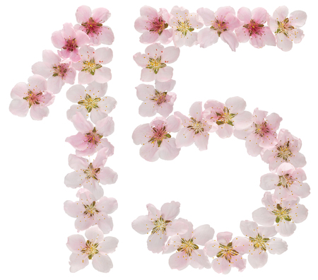 Numeral 15, fifteen, from natural pink flowers of peach tree, isolated on white background