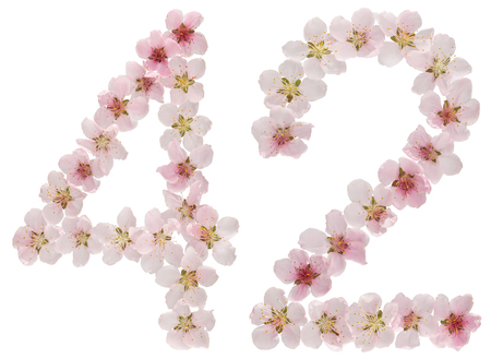 Numeral 42, forty two, from natural pink flowers of peach tree, isolated on white background