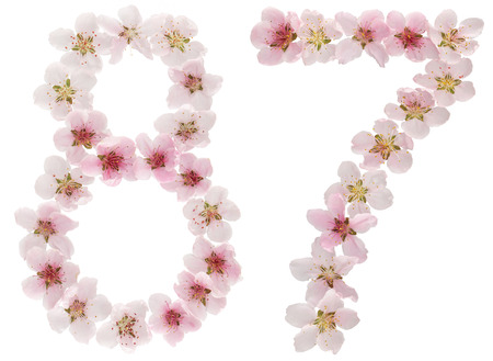 Numeral 87, eighty seven, from natural pink flowers of peach tree, isolated on white background