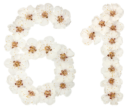 Numeral 61, sixty one, from natural white flowers of apricot tree, isolated on white background