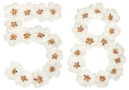 Numeral 58, fifty eight, from natural white flowers of apricot tree, isolated on white background