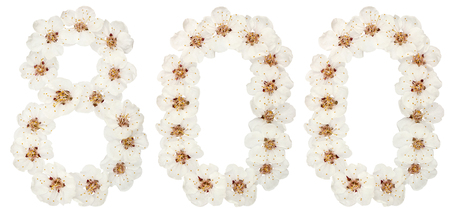 Numeral 800, eight hundred, from natural white flowers of apricot tree, isolated on white background 免版税图像