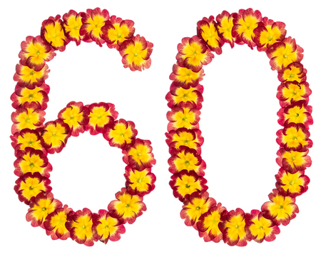 Numeral 60, sixty, from natural flowers of primula, isolated on white background