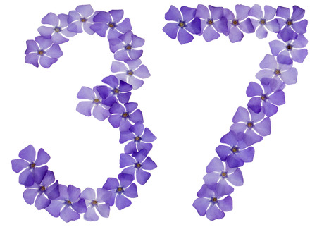 Numeral 37, thirty seven, from natural blue flowers of periwinkle, isolated on white background