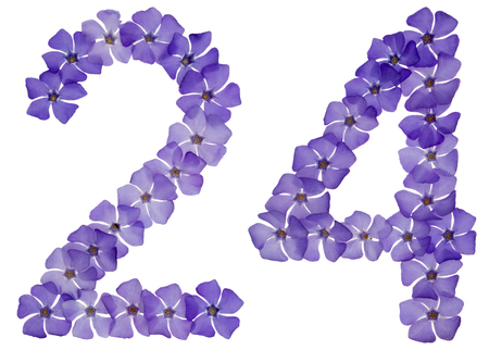 Numeral 24, twenty four, from natural blue flowers of periwinkle, isolated on white background Фото со стока