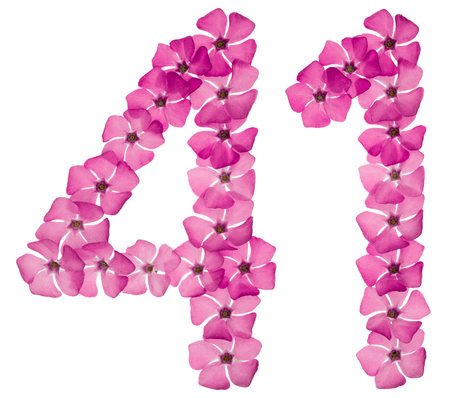 Numeral 41, forty one, from natural pink flowers of periwinkle, isolated on white background