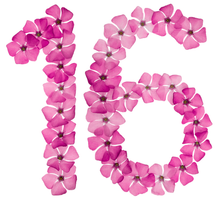 Numeral 16, sixteen, from natural pink flowers of periwinkle, isolated on white background Imagens