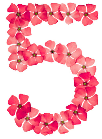 Numeral 5, five, from natural red flowers of periwinkle, isolated on white background