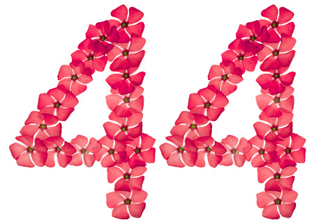 Numeral 44, forty four, from natural red flowers of periwinkle, isolated on white background