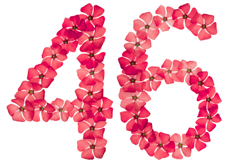 Numeral 46, forty six, from natural red flowers of periwinkle, isolated on white background Imagens
