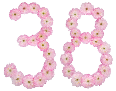 Numeral 38, thirty eight, from natural pink flowers of almond tree, isolated on white background