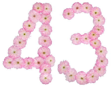 Numeral 43, forty three, from natural pink flowers of almond tree, isolated on white background