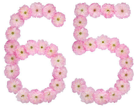 Numeral 65, sixty five, from natural pink flowers of almond tree, isolated on white background