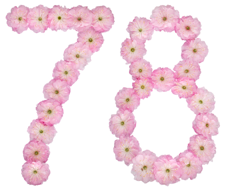 Numeral 78, seventy eight, from natural pink flowers of almond tree, isolated on white background