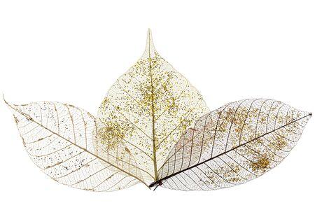 Three skeletonized leaves isolated on white background