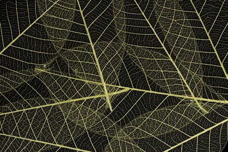 Background from skeletonized leaves isolated on black 版權商用圖片
