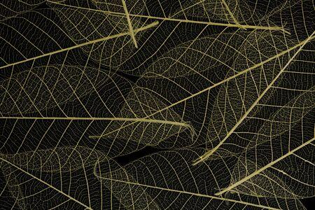 Background from skeletonized leaves isolated on black