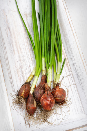 fresh green onions on the white wooden background