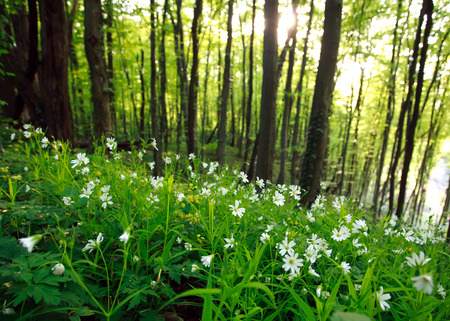 Spring wild flowers in green forest at sunset Stok Fotoğraf