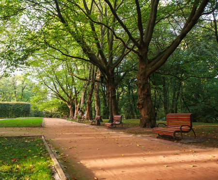 walking paths: Urban green park with walking paths at sunset Stock Photo