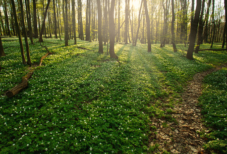 wood grass: Trail in a flowering green forest leading to the setting sun
