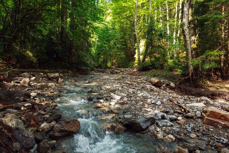 Stream of water in the old rocky mountain forest