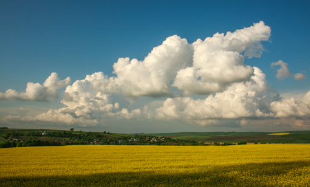 Agricultural blooming green and yellow field crops on a background of blue sky and clouds