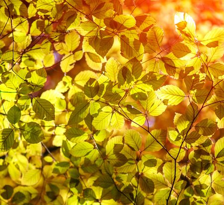 Colorful leaves of trees in autumn in the sunlight beauty nature background