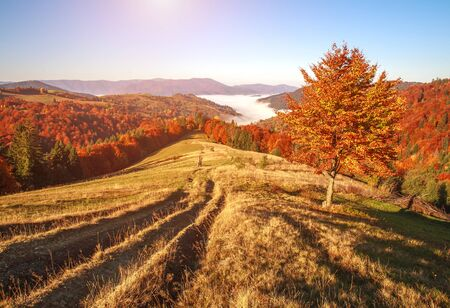 Autumn colorful landscape in the mountains at sunset