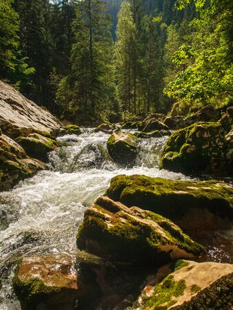 River water flow in a mountain gorge among stones and trees, Bicaz Canyon, Romania