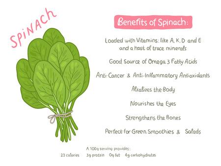 spinach: beneficios para la salud de espinaca dibujados a mano de dibujos animados vector Vectores