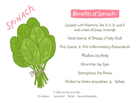 fresh spinach: vector cartoon hand drawn spinach health benefits