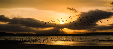 paracas: Sunset on the beach with flying birds in Paracas Pery Stock Photo