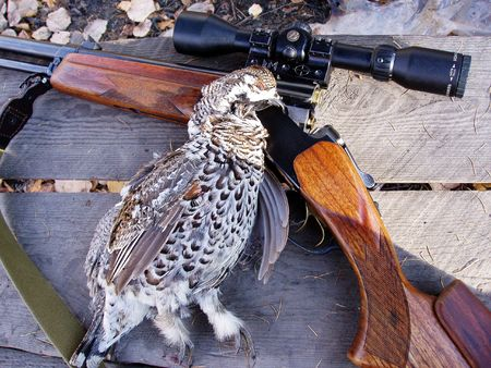 grouse: Grouse with a gun on the table