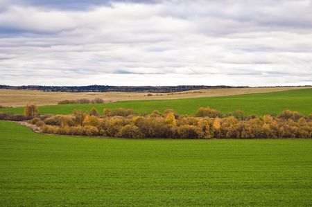 Yellow tree, green winter wheat, the yellow stubble, wood on the background of the cloudy sky photo