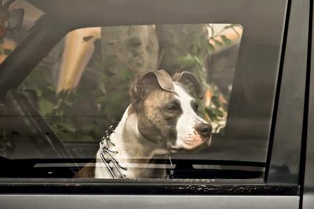 perro triste: Due�o de perro triste esperando en el coche
