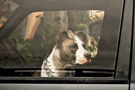 Sad dog owner waiting in the car Archivio Fotografico