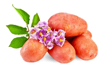 Pile of red potatoes with a flower and green leaves isolated on white background photo