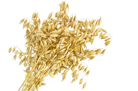 Sheaf of stalks of oats isolated on white background