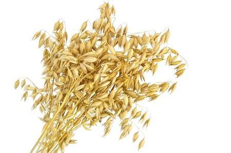 oat: Sheaf of stalks of oats isolated on white background