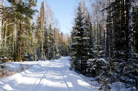 The narrow road in the winter woods on a background of blue sky